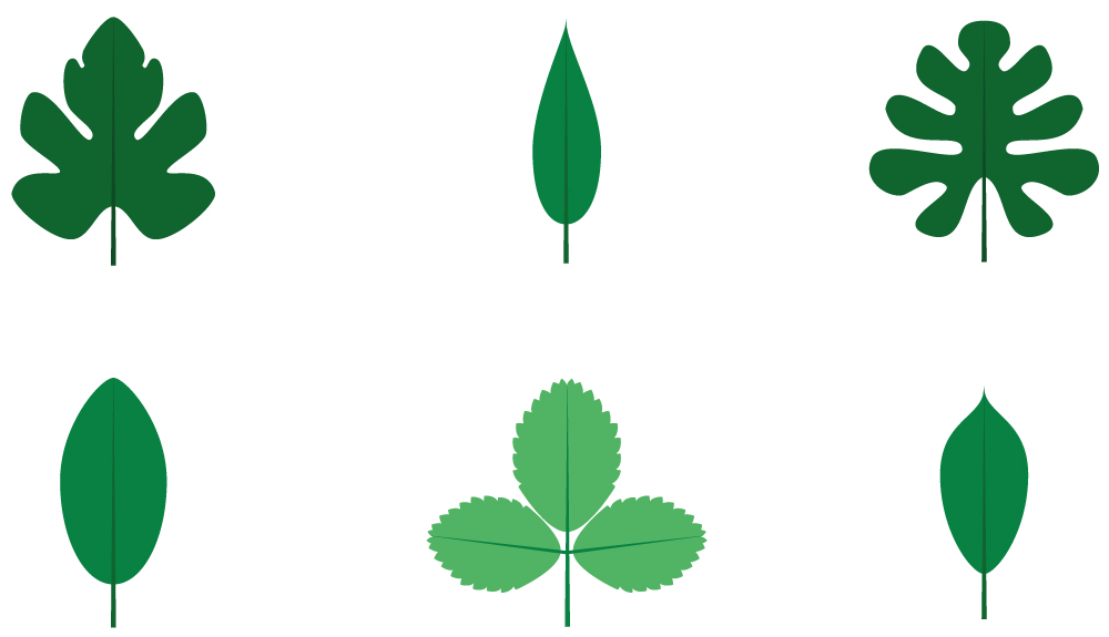 Fruitpedia leaves