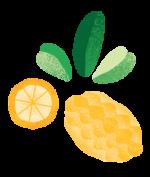 citrus pattern element 1