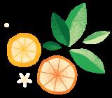 citrus pattern element 2